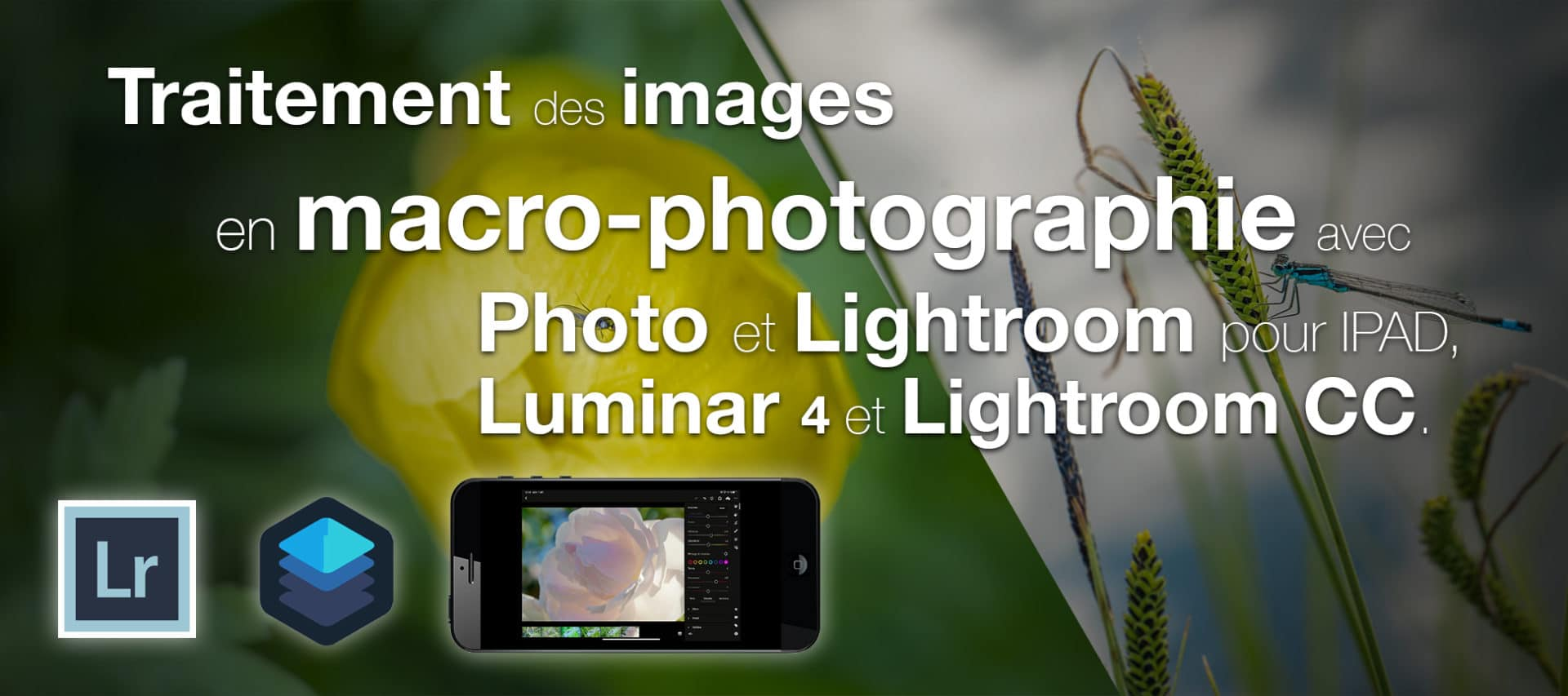 Traitement des images en macro-photographie avec Photo, Lightroom Mobile, Luminar
